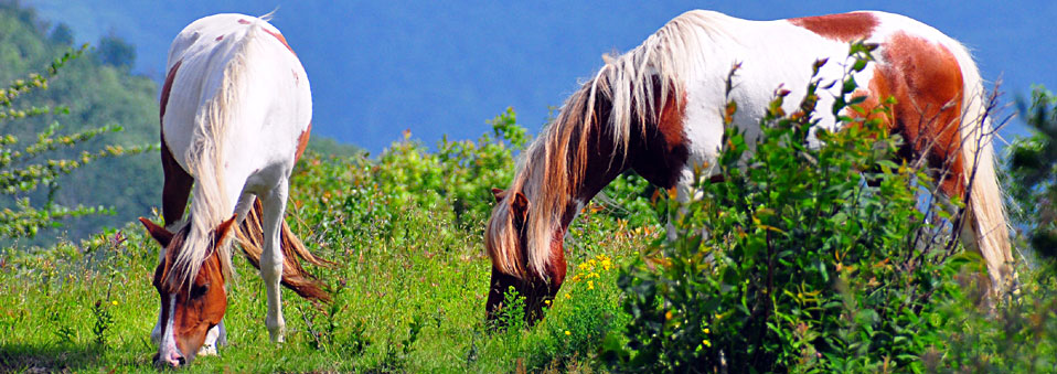 """Spring Horses"" – Albert Herring / CC BY 2.0 / Virginia State Parks staff"