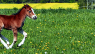 Galloping Foal / Pixabay / CC0 Creative Commons