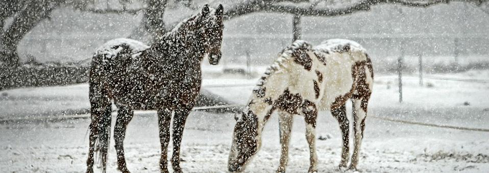 """Snowfall"" / Bhakti2 / CC0 Creative Commons"