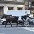 Big questions overhang Manhattan carriage controversy