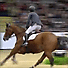Young Brit star Scott Brash voted 2013 Noelle Floyd.com Rider of the Year