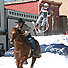 Skijoring has a fascinating history