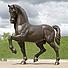 La passion du cheval, the passion of the horse