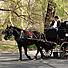 Horse safety group: Carriage industry is well-regulated and humane