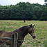 Horse near Old Forge Farm - Photo: © Nigel Chadwick / Wikimedia Commons / CC BY-SA 2.0
