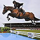 What is the future of equestrian sports?
